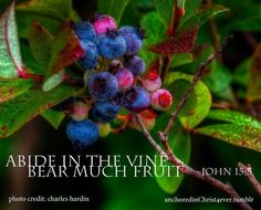 """I am the vine, you are the branches. He who abides in Me, and I in him, bears much fruit; for without Me you can do nothing."" John 15:5"