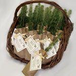 natural eco-tree favors