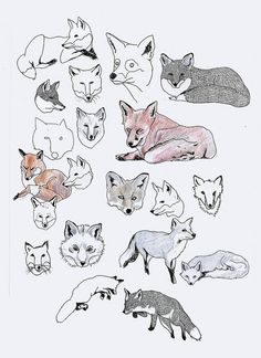 fox illustrations