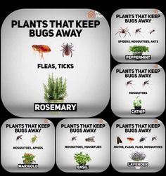 Plants that keep bugs away!
