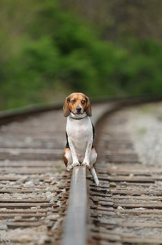 I ride the rails