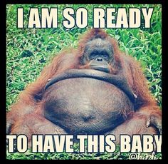 Pregnancy humor -- I'm not there yet, but starting to feel that way, hahaha!!! ;)