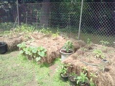 Straw Bale Gardening For Quick Fall Gardening