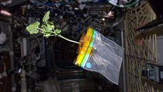 """""""Космический кабачок"""" с МКС, по словам астронавта НАСА Дона Петтита, чувствует себя хорошо."""