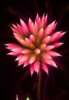 Long exposure fireworks  Pink Flower