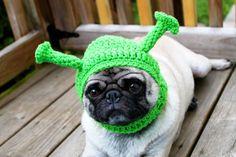 hats, anim, dogs, halloween costumes, dog hat, pugs, knit hat, pickl, shrek