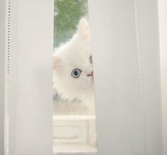 Peek-a-boo....I see you.  White kitty.