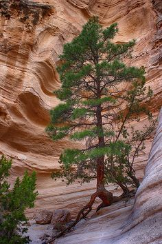 Life from the Rock, Cochiti Pueblo, New Mexico