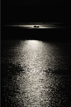 Elephants in the Moonlight    © Wim van den Heever