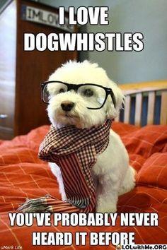 Hipster dog, kinda cute