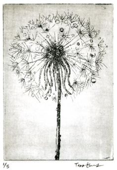 Dandelion Drawing by mousiness