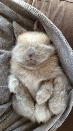 Adorable little baby bunny