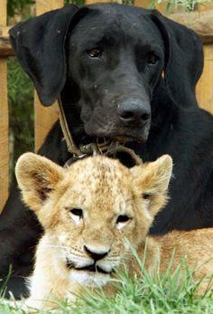 45 Adorable Animal Odd Couples