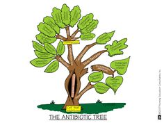 nurs school, students, family trees, schools, visual aids, antibiot tree, families, rocks, nursing