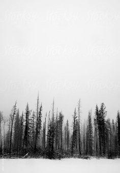 treescape by alan shapiro