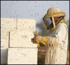 BeeKeeping for Absolute Beginners on Keeping Honey Bees