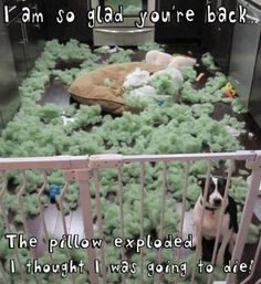 I'm glad you're back dogs, funny pictures, funni, thought, dog beds, kitchen, puppi, pillows, funny memes