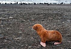 I want a baby seal... SOOOOOO BADDDDDD!!!!!!