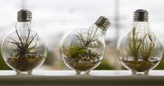 tiny terrarium bulb-terrarium/#