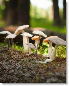 felted mushrooms ♥ http://felting.craftgossip.com/2013/04/02/felted-mushroom-instructions/