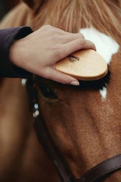 'A lovely horse is always an experience.... It is an emotional experience of the kind that is spoiled by words'