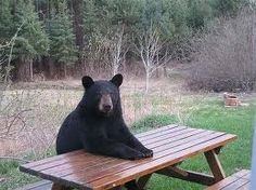 dinner, supper, food, picnic tables, yogi bear, lunch, dog, animal, picnic baskets