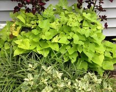 Give me spots on my apples and holes in my sweet potato vine by Susan Harris http://gardenrant.com/2014/09/give-me-spots-on-my-apples-and-holes-in-my-sweet-potato-vine.html?utm_source=rss&utm_medium=rss&utm_campaign=give-me-spots-on-my-apples-and-holes-in-my-sweet-potato-vine  Young House Love  http://idealshedplans.com/storage-shed/