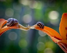 The Most Amazing Up-Close Snail Photos You'll EverSee