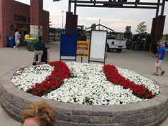 Made out of petunias Normal, IL
