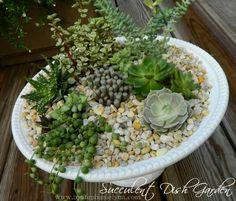 Indoor succulent garden in a large dish