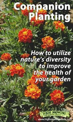 Choosing plants, flowers, and herbs -- then grouping them into families and friends to make garden neighborhoods -- is one of my favorite parts of companion gardening.  #gardening
