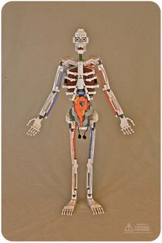 anatomy model with legos...perfect for Classical Conversations Cycle 3!