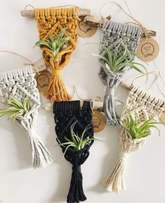Macrame Air Plant Holder // Mini Macrame Plant Hanger // Air Plant Display // Driftwood Air Plant Ho