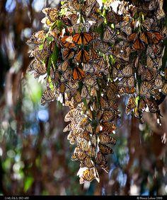 Coronado Butterfly Preserve  Santa Barbara, California