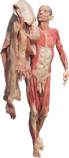 Human skin body