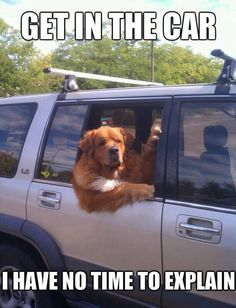 make me laugh animal pics, dog park, animals, dogs, dog photos, window, funny pictures, road trips, dog costumes