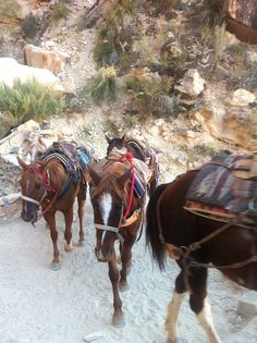 Note to self: Have the mules carry your bags!