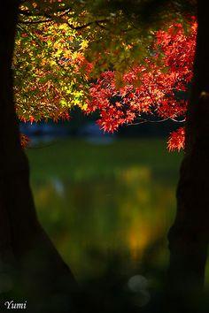 ✯ Autumn Glow