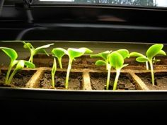 Common Seed Starting Problems and how to solve them.