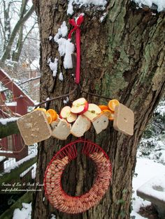 skewered fruit, bread, suet and a hanging peanut feeder will satisfy many different guests http://ourfairfieldhomeandgarden.com/diy-project-...