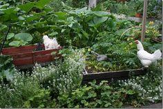 Blog Party for Free-Range Chicken Gardens by Jessi Bloom | North Coast Gardening