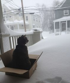 The only way cat will go out in the snow.