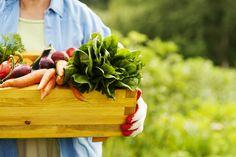 ¿Por qué comer #alimentos orgánicos?  #salud y #bienestar