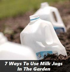 7 Ways To Use Milk Jugs In The Garden