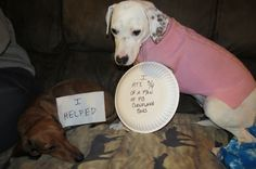 Dog Shame | I ate 3/4 of a pan of PB cornflake bars.