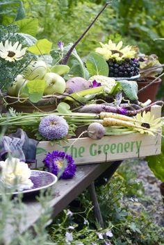 fresh veget, garden bliss, decor inspir, color, gardens