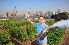 lepeupledesabeilles gardenista urban, urban beekeep, urban agricultur