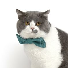 Loyal Luxe - Original Bow Tie for Cats