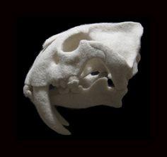 Stephanie Metz Saber Tooth Tiger Skull