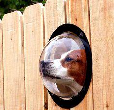 Dog, peep-hole